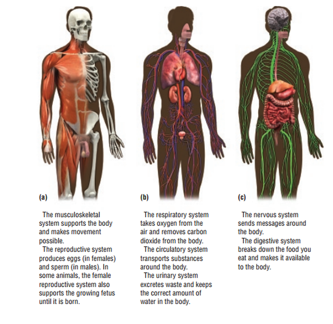 THE ORGAN SYSTEM - BIOLOGY